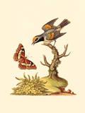 Country Birds II
