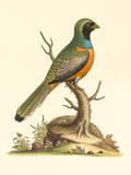 Country Birds III