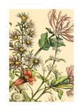 Furber Flowers IV - Detail