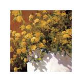 Yellow Geraniums