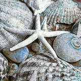 Seashells in Blue I