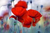Fleurit en Rouge I