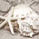 Seashells in White I