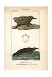 Echidna And Platypus From Frederic Cuvier's Dictionary of Natural Science: Mammals  Paris  1816