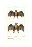 Geoffroy's Rousette Bat  Rousettus Amplexicaudatus  And Naked-backed Fruit Bat  Dobsonia Peronii