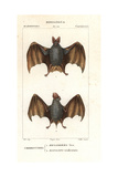 Greater False Vampire Bat  Megaderma Lyra  And Horseshoe Bat  Rhinolophus Tridens