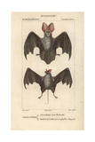 Egyptian Bats From Frederic Cuvier's Dictionary of Natural Science: Mammals  Paris  1816