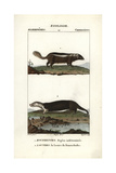 Skunk And Sea Otter From Frederic Cuvier's Dictionary of Natural Science: Mammals  Paris  1816