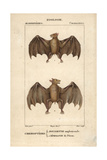 Rousette And Fruit Bats From Frederic Cuvier's Dictionary of Natural Science: Mammals  Paris  1816