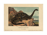 Apatosaurus Excelsus  Extinct Genus of Sauropod Dinosaur From the Jurassic