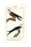 Yellow-billed Kite  Milvus Aegyptius  And Swallow-tailed Kite  Elanoides Forficatus
