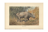Dinocerata  Extinct Herbivorous  Rhinoceros-like Hoofed Creatures with Paired Horns And Tusks