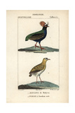 Crested Partridge And Madagascar Plover