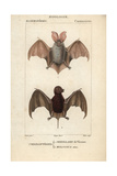 Bats From Frederic Cuvier's Dictionary of Natural Science: Mammals  Paris  1816