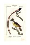 Eastern Kingbird  Tyrannus Tyrannus  And Asian Paradise Flycatcher  Terpsiphone Paradisi
