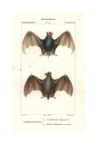 Egyptian Tomb Bat  Taphozous Perforatus  And Serotine Bat  Eptesicus Serotinus