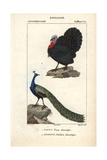 Turkey And Peafowl From Sainte-Croix's Dictionary of Natural Science: Ornithology
