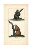 Sloths From Frederic Cuvier's Dictionary of Natural Science: Mammals  Paris  1816
