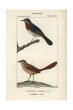 Warbler And Grasswren From Sainte-Croix's Dictionary of Natural Science: Ornithology