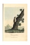 Eurasian Treecreeper  Certhia Familiaris