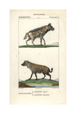 Hyenas From Frederic Cuvier's Dictionary of Natural Science: Mammals  Paris  1816