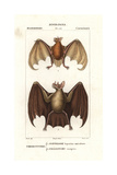 Greater Bulldog Bat  Noctilio Leporinus  And Greater Spear-nosed Bat  Phyllostomus Hastatus