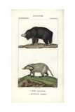 Sloth Bear And Hog Badger From Frederic Cuvier's Dictionary of Natural Science: Mammals