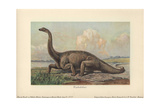 Diplodocus Is a Genus of Extinct Diplodocid Sauropod Dinosaur of the Late Jurassic