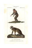 Chimpanzee  Simia Troglodytes  And Moustached Monkey  Cercopithecus Cephus