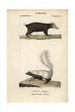 Sunda Stink Badger And Striped Skunk From Frederic Cuvier's Dictionary of Natural Science: Mammals