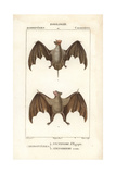 Egyptian Guano Bat And Red Fruit Bat From Frederic Cuvier's Dictionary of Natural Science: Mammals