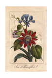 Blue Iris And Passionflower