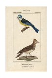 Bluetit And Crested Lark From Sainte-Croix's Dictionary of Natural Science: Ornithology