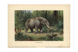 Mastodon  a Large Tusked Mammal Species of the Extinct Genus Mammut