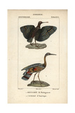 Painted Snipe And Sunbittern From Sainte-Croix's Dictionary of Natural Science: Ornithology