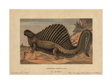 Dimetrodon  Extinct Predatory Synapsid Genus of the Permian