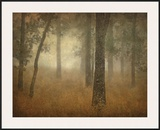 Oak Grove in Fog  Study 24
