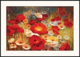 Meadow Poppies I