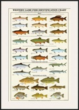 Western Gamefish Identification Chart