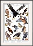 Birds of Prey I