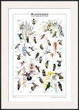 Hummingbirds of US & Canada