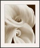 Fleur No 1