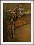 Panthera du Serengeti