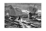 19th Century Whale Hunt