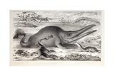 1858 Prehistoric Marine Reptiles