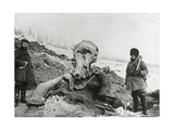 Fossil Mammoth Excavation