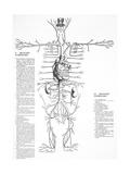 Circulatory System  16th Century