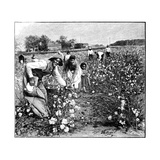 Cotton Industry  Early 20th Century