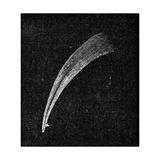 Donati's Comet  19th Century Artwork