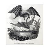 1857 Gosse Pterodactyle Bat-Lizards